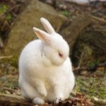 What Everybody Ought to Know About American Rabbit