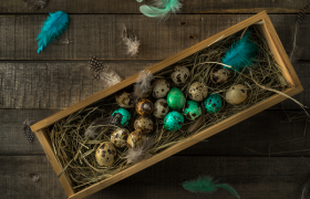 Quail Nesting Boxes: All about Nesting Boxes